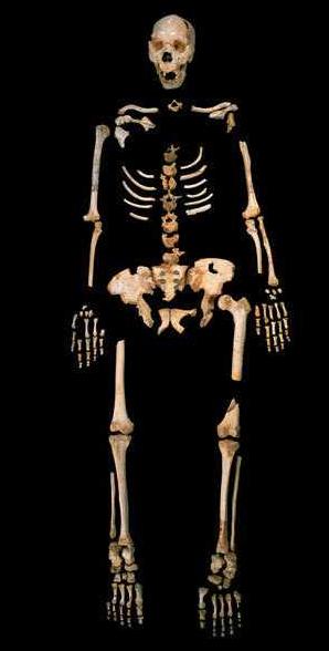 Aus 400000 Jahre alten Knochen wie diesen haben Forscher Erbgut gewonnen und für Verwandschaftsanalysen genutzt (c) Javier Trueba, Madrid Scientific Films